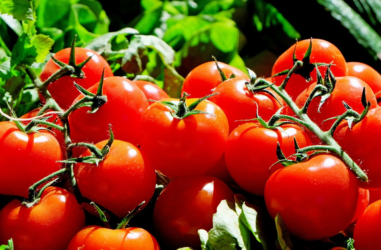 tomatoes and varicose veins